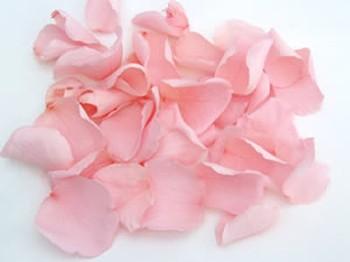 Baby Pink Real Rose Petals