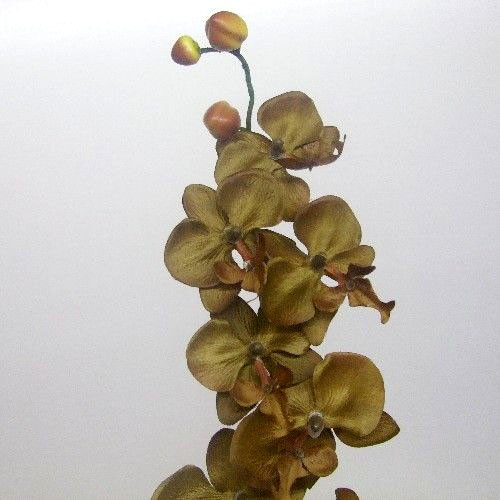 Stem of Brown Orchids