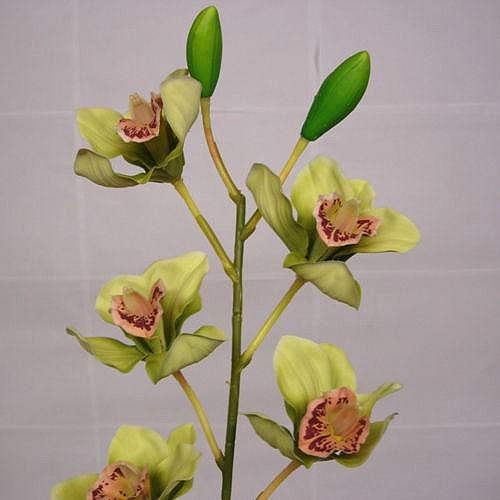 Stem of Green Cymbidium Orchids