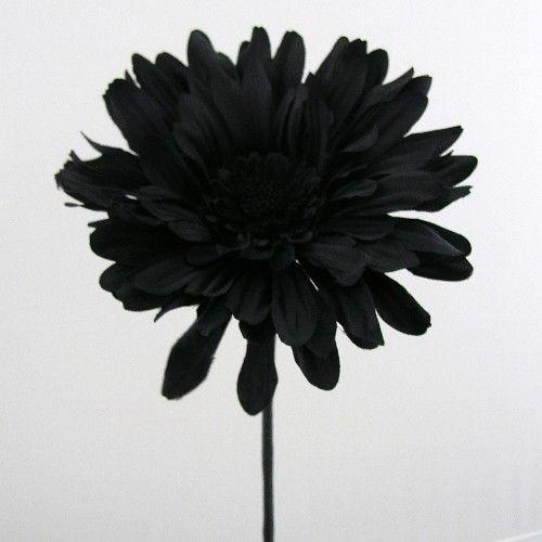 Loose flowers 6 silk large black gerbera artificial silk wedding 6 silk large black gerbera mightylinksfo