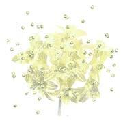 Babies Breath - 12 Stems - Lemon Yellow