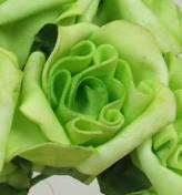 Lime Green Medium Rose Sample