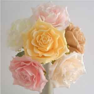 Cream Luxury Open Rose Sample