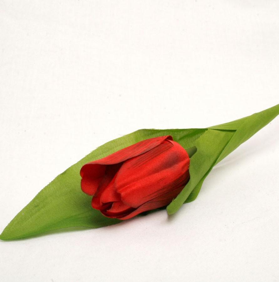 Single Red Tulip Sample