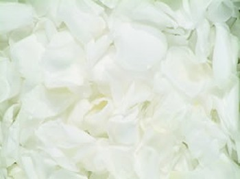 White Real Rose Petals