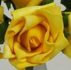 Yellow Medium Rose Sample