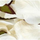 1000 Cream Silk Rose Petals