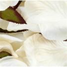 Cream Silk Rose Petals