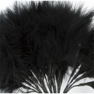 Black Fluff Feathers