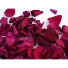 Cerise Pink Real Rose Petals
