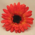 Orange Gerbera Sample