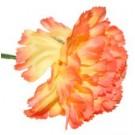 10 Orange Carnations
