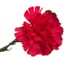 Red Carnation Leaf Buttonhole