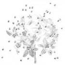 Babies Breath - 12 Stems - White