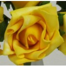 Yellow Medium Rose Sample